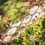 ogrodzenie