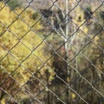 fence-1075396_1920